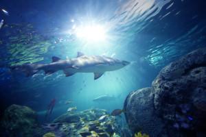 dangerous-lagoon-shark-small