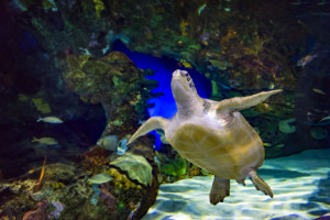 turtle_rising-small